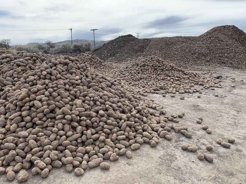 Abandoned Piles of Potatoe